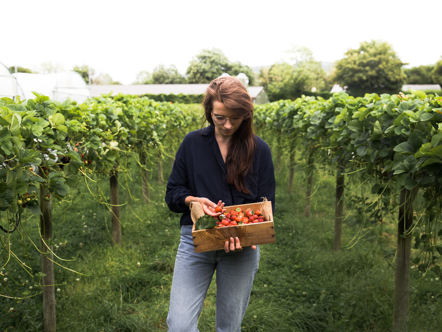 Strawberry Picking at Primrose Vale Farm